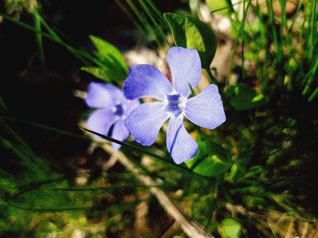 Flower Head Flower Orchid Leaf Blue Purple Petal Beauty Close-up Plant Flowering Plant EyeEmNewHere