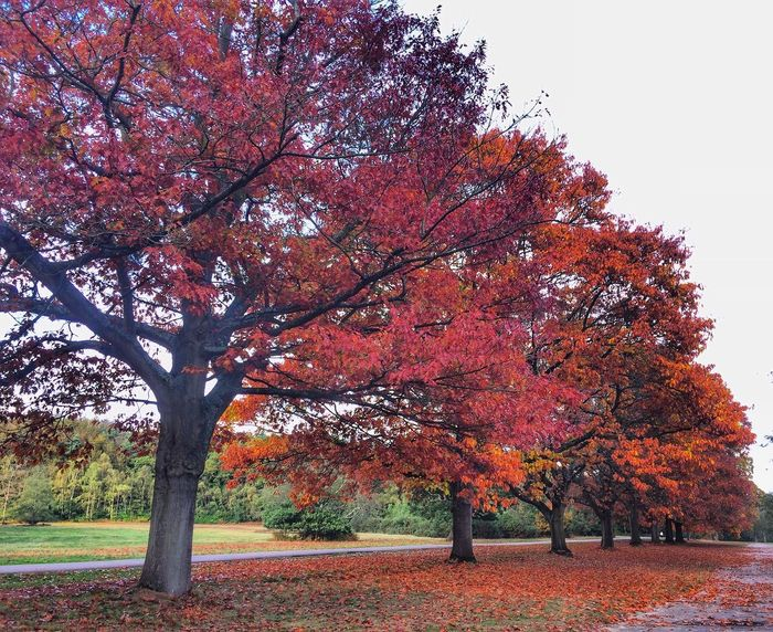 Autumn colours EyeEm Team EyeEm Gallery Nature Tree Plant Autumn Growth Nature Beauty In Nature Change Outdoors Park Sky Day