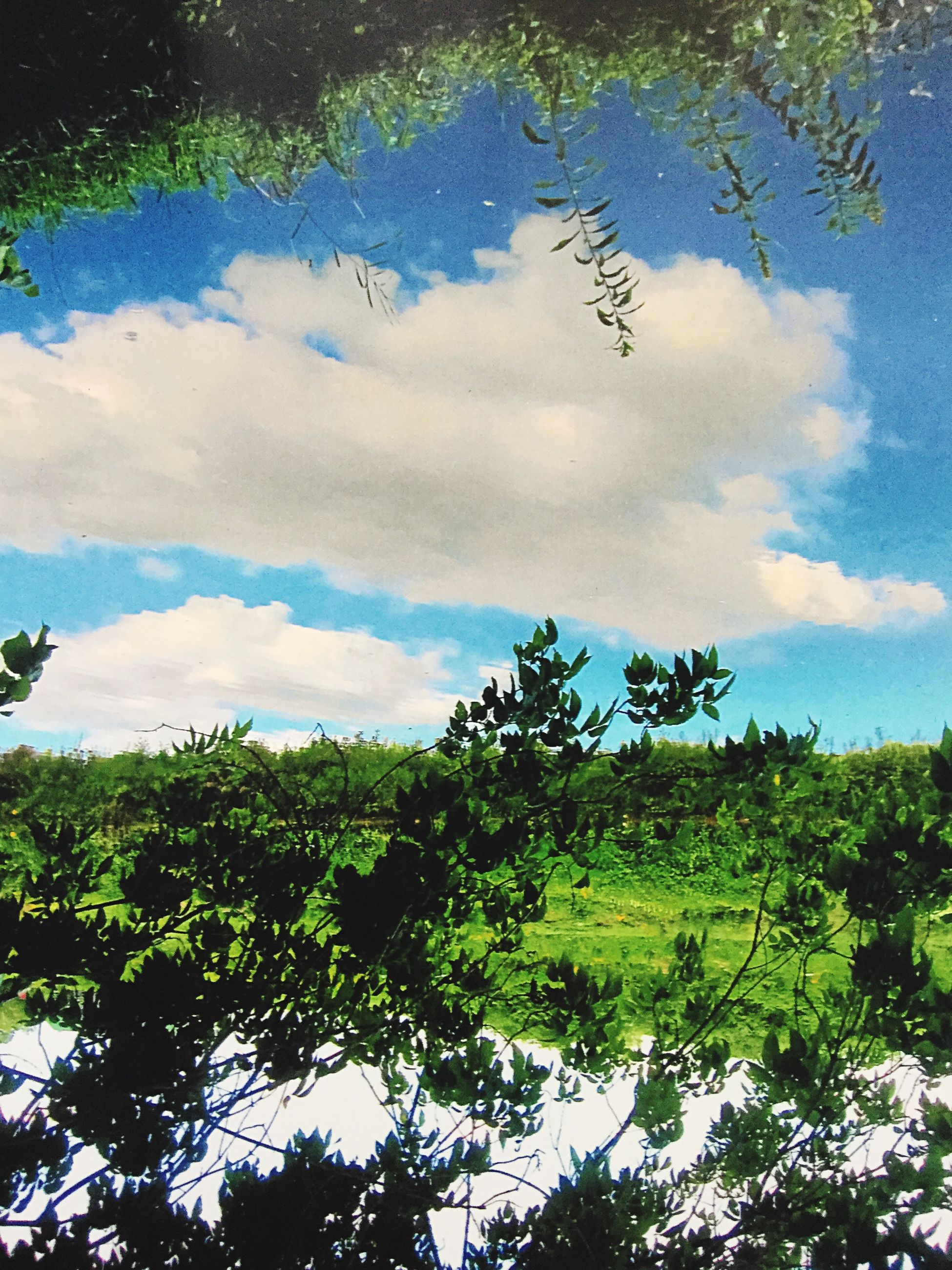 tree, sky, cloud - sky, tranquility, growth, tranquil scene, beauty in nature, nature, scenics, green color, cloud, cloudy, branch, low angle view, blue, day, idyllic, outdoors, no people, lush foliage