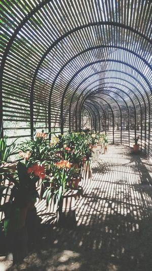Clivias Garden