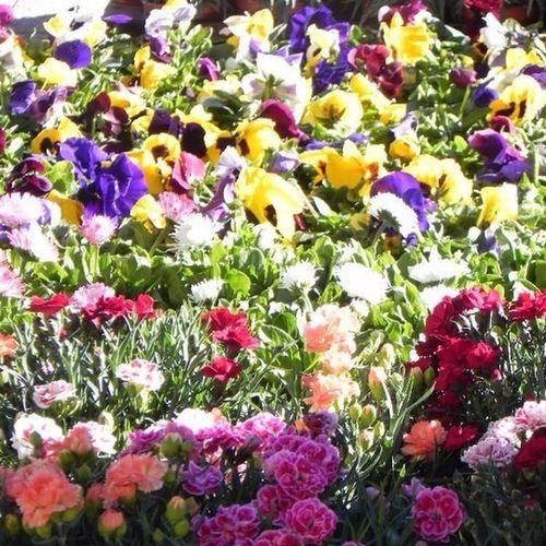 Parada De Flores