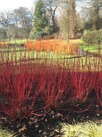 Colours Savill Gardens Grass Nature Beauty Everywhere Spiky Savill Gardens Nearly Spring Red Orange
