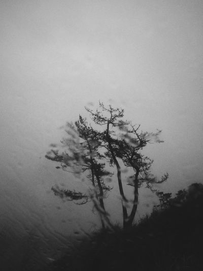 Storm passing, messing up my swim plans. Black And White Minimalism Trees Silhouette