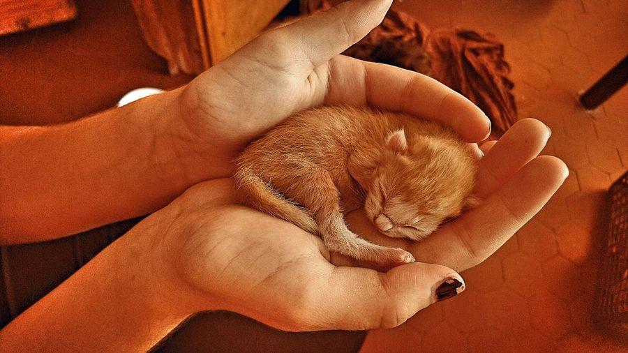 Mon petit chaton que j'aime tellement <3 l Relaxation One Animal Domestic Animals Mi Amor ♥ A Passion Petit Chat Qui Vient De Naitre