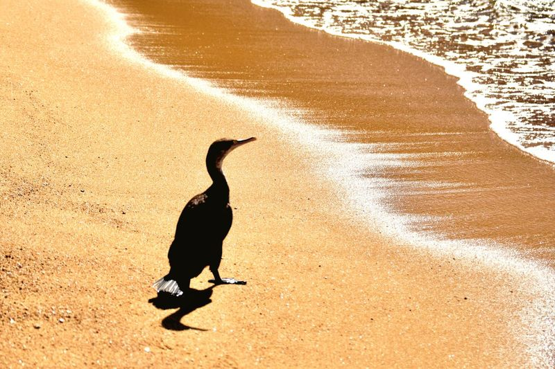 Vertebrate Bird Animal Animal Themes Sunlight Shadow Animals In The Wild Land High Angle View Beach Water Silhouette Sand No People Outdoors Nature One Animal Day Animal Wildlife