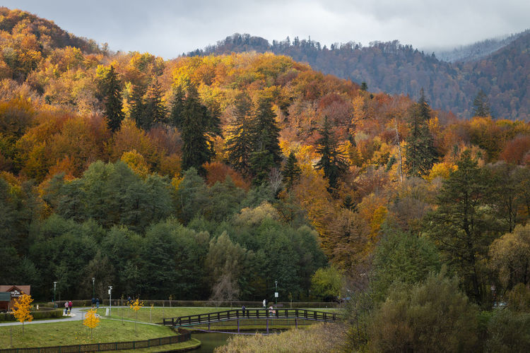 Scenic view of trees by mountains against sky during autumn