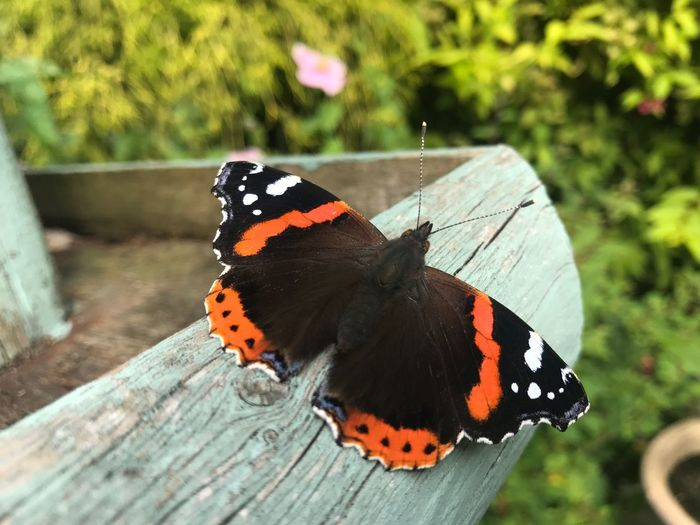 Insect Invertebrate Butterfly - Insect Animal Wildlife Animal Themes Animals In The Wild Animal Outdoors Focus On Foreground Day No People Natural Pattern Beauty In Nature Animal Wing One Animal Nature Butterfly Animal Markings Close-up Flower