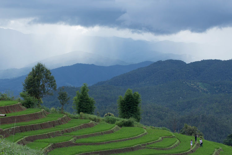Agriculture Beauty In Nature Cloud - Sky Day Environment Field Green Color Land Landscape Mountain Mountain Range Nature No People Non-urban Scene Outdoors Phabongpiang Plant Rain Forest And Rice Field In Thailand Rural Scene Scenics - Nature Sky Tranquil Scene Tranquility Tree