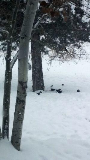 Winter Days In Colorado Winter Snow EyeEm Birds Colorado Cold Black Birds