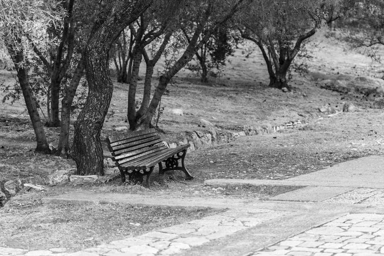Absence Athens Bench Day Empty Filopapou Footpath Greece Ground Nature Outdoors Park Park Bench Relaxation Seat Shadow Stones Sunlight Tranquility Tree Tree Trunk Wood Wood - Material