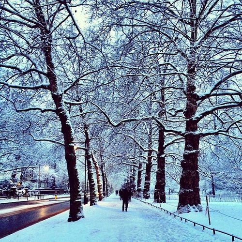 Beautiful White Birdcage Walk ❄❄❄ #london #insta_london #jj #insta_uk #alan_in_london #london #winter #snow Winter Snow London Jj  Insta_uk Alan_in_london Insta_london