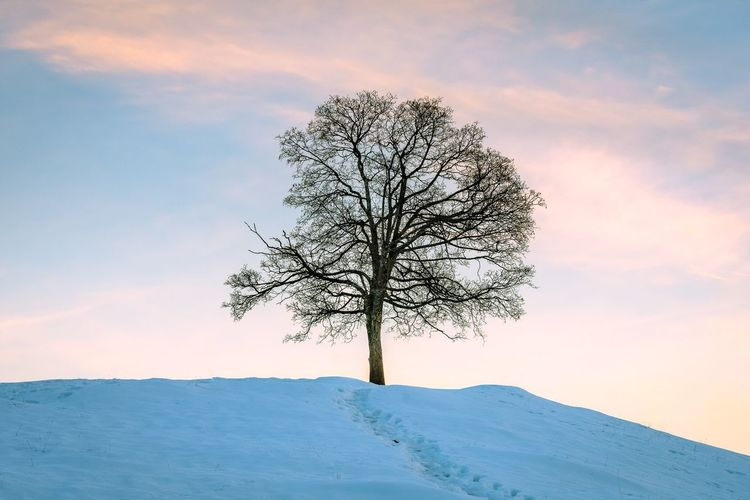 Nature Beauty In Nature Tree Tranquility Tranquil Scene Sky Scenics Landscape Lone Bare Tree Outdoors Remote No People Cold Temperature Isolated Day