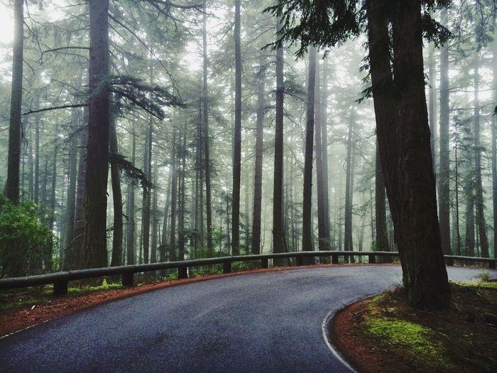 Scenics Road
