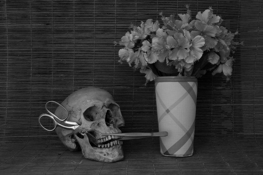 Conceptual Art Dark Darkness Fear Halloween Halloween Skull Holiday Studio Anatomy Art Art Skull Bone  Concept Conceptual Dead Die Festival Scary Skull Skull Art Skull Concept Still Life
