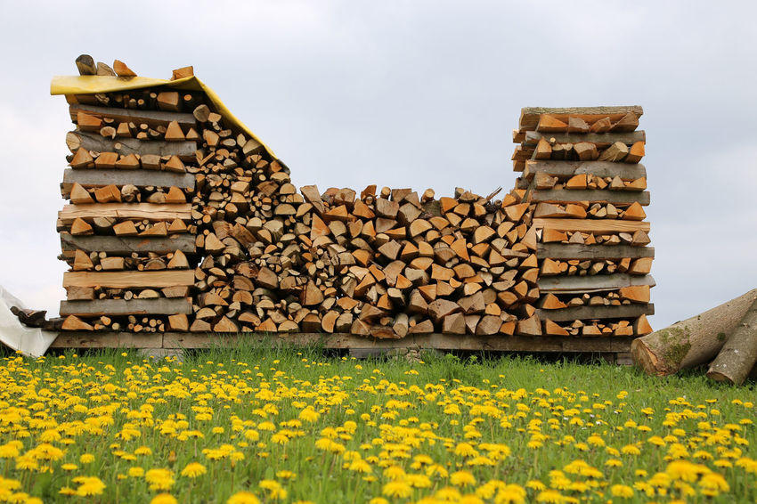 Blooming Blossom Built Structure Chopped Wood Daffodils Firewood Flower Petal Stack Of Firewood Yellow Yellow Flowers