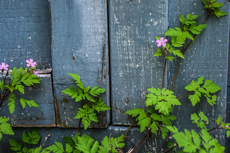 Plant growing on wooden wall