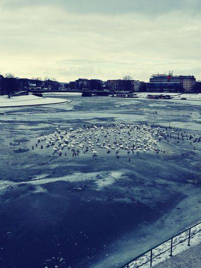 Water Outdoors No People Nature Sky Day Winter CracowCity Poland ❄📷⛄🍻 Vistula River Frozen Water Birds Lifeamplitude