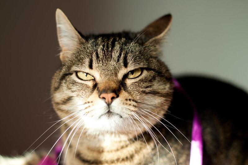 grumpy,
