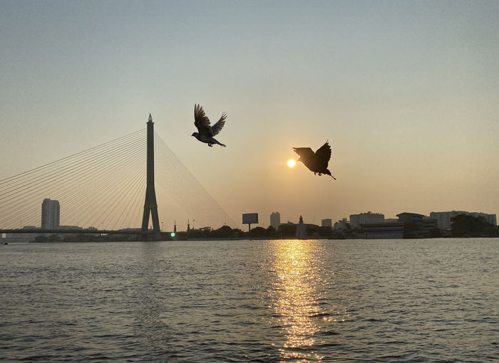 Birds flying over river in city