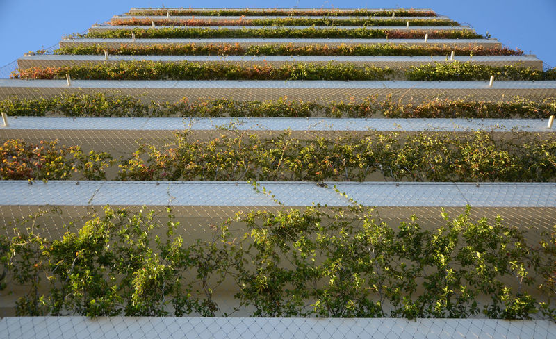 Architecture Balcony Building Exterior Built Structure Day Freshness Green Color Green Wall Growth Nature No People Outdoors Plant Sky Sustainability Urban Geometry Grilling Adapted To The City Minimalist Architecture The Architect - 2017 EyeEm Awards
