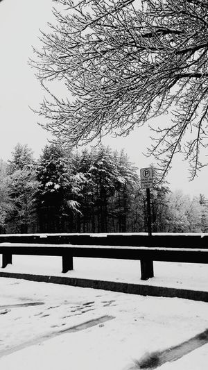 Shades Of Grey Blue Hills Reservation Winter 2014