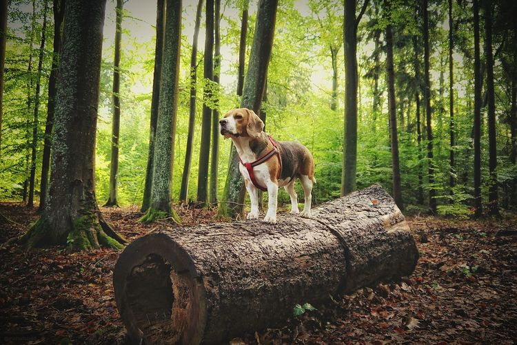 Portrait of dog on tree stump in forest