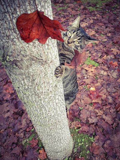 leaves predator