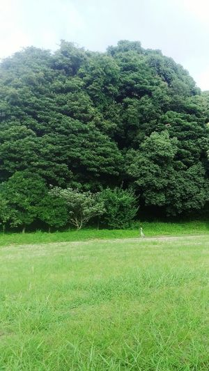 Green Color Growth Tree Grass Nature Lush Foliage No People Outdoors