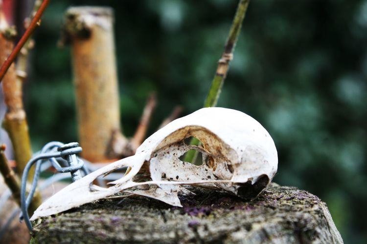 Close-up of animal skull on tree stump