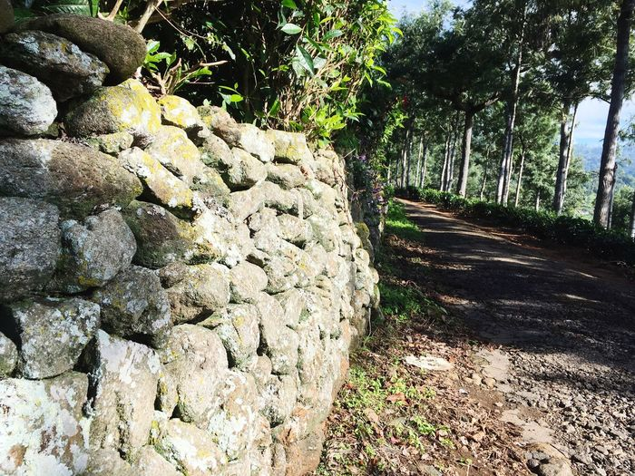 Rock walls inHill Roads.. Tree Day Rock - Object Nature Outdoors Sunlight No People EyeEm Gallery Away From The City Freshness Mountain Eyeem Market EyeEm Nature Lover Silhouette Village Photography