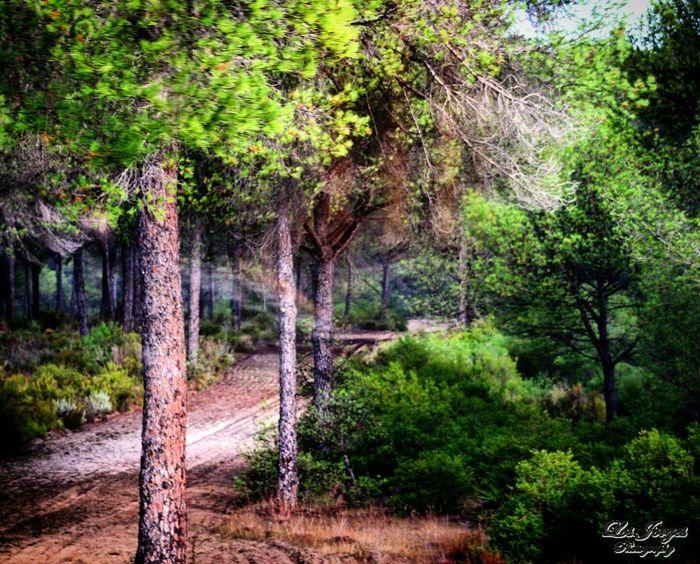 Doñana Nature Nature Photography Natural Beauty Nature_collection Parque Nacional De Doñana Huelva Estaes_huelva SPAIN Spain♥ España