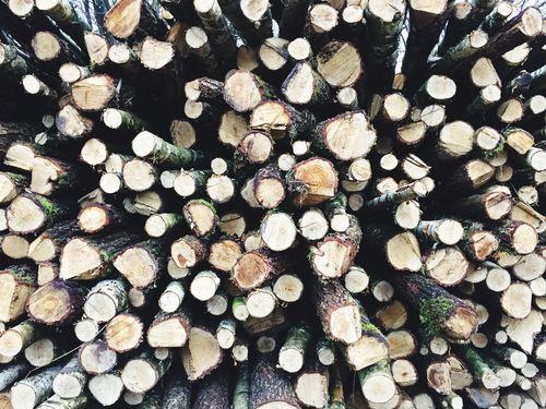 Hard Wood Wood
