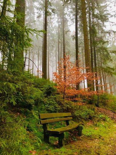 Bench by trees in forest