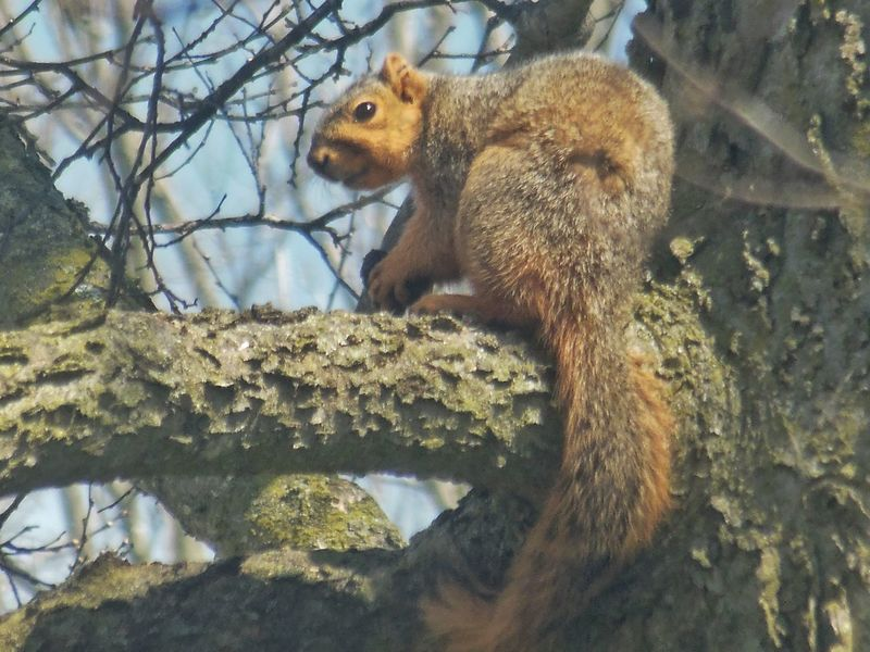 Nature Photography Spring Nikon Treegasm Wildlife & Nature Indiana April2018 Zoomed In Tree Branch Squirrel Close-up Wildlife