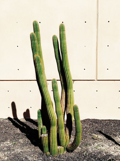High angle view of succulent plant against wall