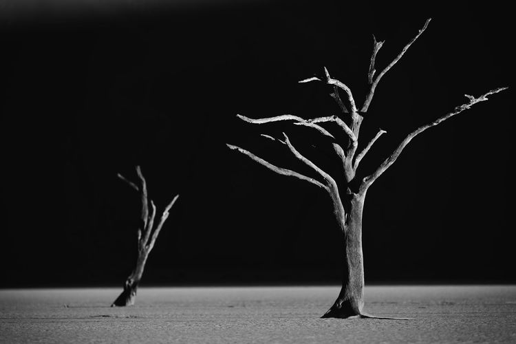 Black & White Dead Tree Bare Tree Black And White Blackandwhite Photography Dead Plant Land Nature No People Outdoors Plant Tree
