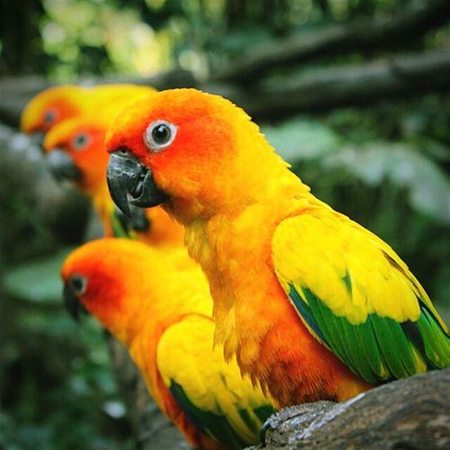 1bird 2bird 3bird 4bird