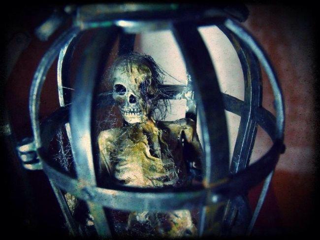 Aurora model kit. Skeleton in cage.