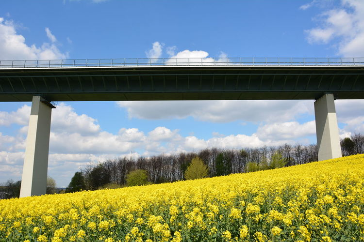 Low angle view of bridge on flowering field against blue sky
