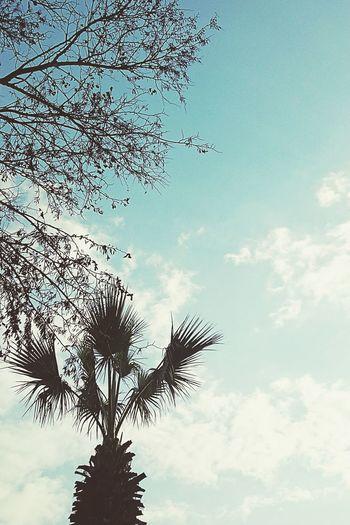 Tree Palm Palms Palm Trees Trees Tree_collection  Tree And Sky Treescollection Trees And Sky Tree Silhouette Tree Art Tree Branches View Sky Blue Sky Nature_collection Nature Nature Photography Nature_perfection Naturelovers Naturephotography Showcase: February