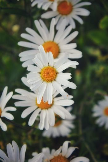 Flowers of the