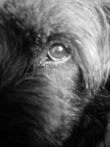 Eyeball Pets Iris - Eye Human Eye Portrait Eyesight Dog Looking At Camera Close-up
