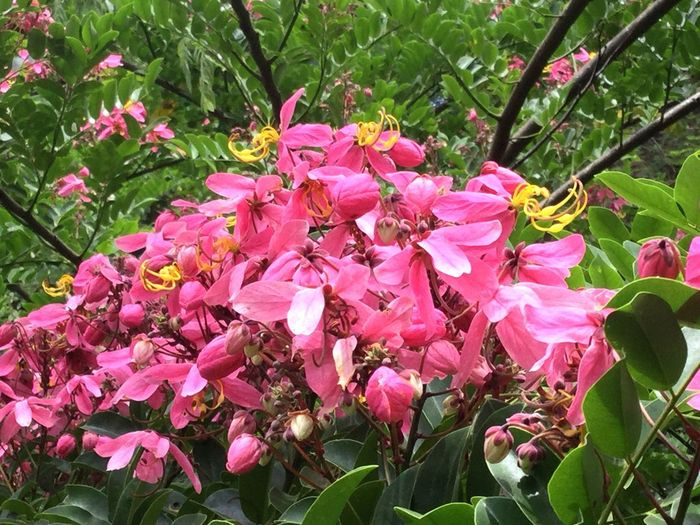 Plant Flower Flowering Plant Growth Pink Color Fragility Freshness Petal Inflorescence Nature Beauty In Nature Blossom