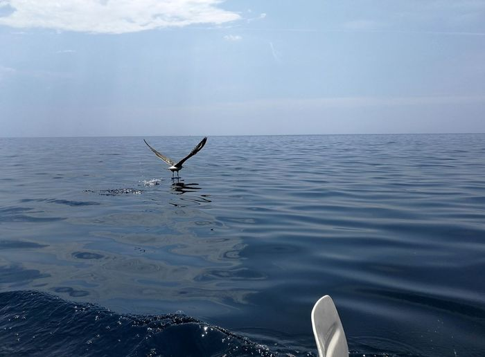 Acquafredda Canoe Maratea Take Off Animal Animal Wildlife Animals In The Wild Aquatic Mammal Beauty In Nature Bird Day Flying Horizon Over Water Marine Mediterraneo Nature No People One Animal Outdoors Paddle Sea Sky Vertebrate Water Waterfront