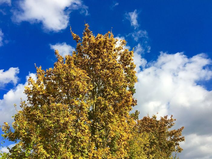 Tree Sky Nature Low Angle View Growth Cloud - Sky Beauty In Nature Outdoors No People Flower Day Scenics