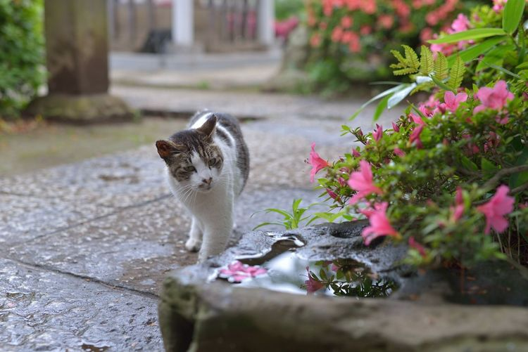 Meow Cats Cat Cat♡ Kitty 猫ぽとれ Animals Flower Flowers Nature Relaxing Taking Photos Enjoying Life Hello World Nature_collection EyeEm Best Shots EyeEm Best Edits EyeEm Nature Lover EyeEm Flower From My Point Of View Walking Around Street Snapshot Snapshots Of Life Nikon