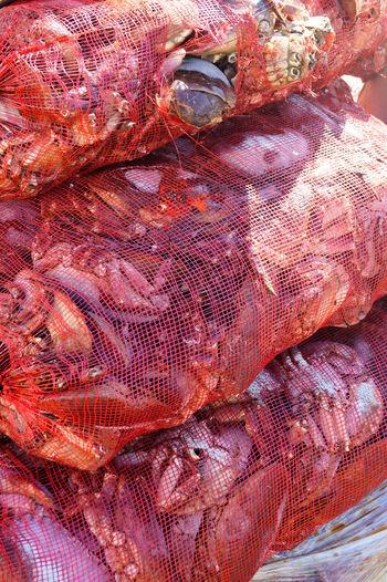 Close-up Crab Dorset Fisherman Fishernet Full Frame Seafood