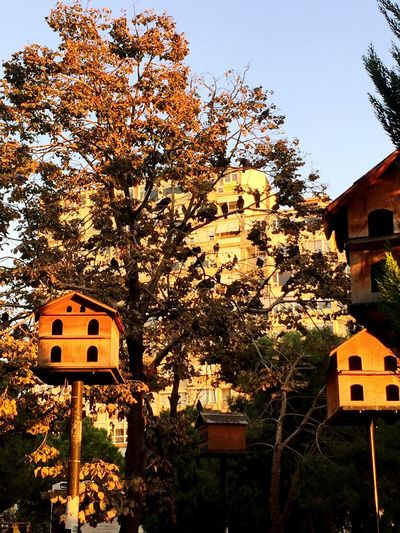 Building Exterior Architecture Built Structure Tree House No People Growth Outdoors Residential Building Day Nature Clear Sky Sky Beauty In Nature