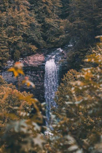 Falls Creek Falls Beauty In Nature Flowing Water Forest Growth Motion Nature Outdoors Plant Tranquil Scene Tranquility Tree Water Waterfalls