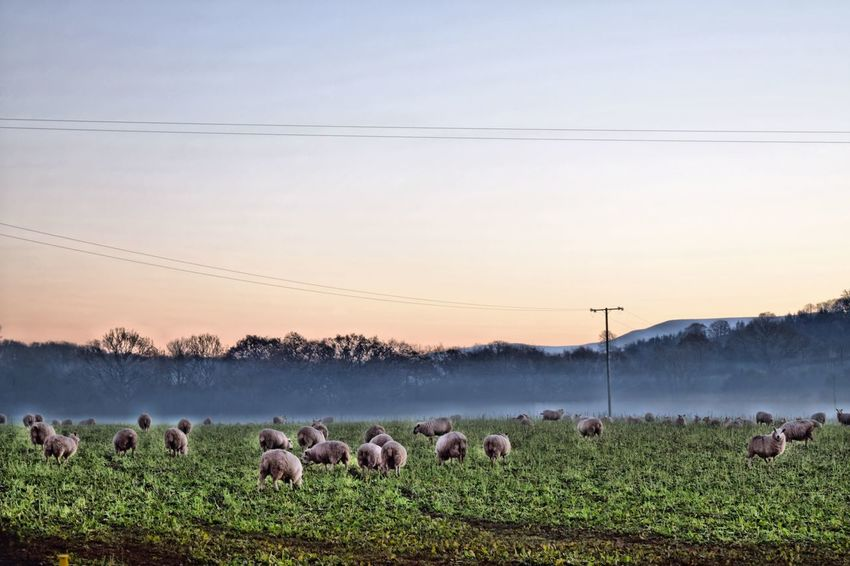 Beauty In Nature Landscape Mist Nature Outdoors Scenics Sheep Sky Eyeemmarket